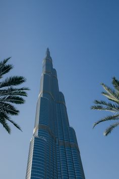 low angle view, architecture, palm tree, modern, skyscraper, built structure, tower, tall - high, tree, building exterior, clear sky, copy space, day, no people, city, outdoors, growth, sky
