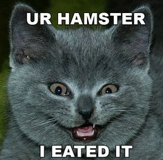 Image Detail for - Funny Pictures of Cats With Captions-the cat with evil smile