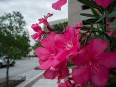Pink - Leonidas Bratini