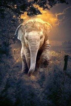 14 best elephant background images in 2017 Asian Elephant, Elephant Love, Elephant Art, Elephant Tattoos, Elephant Photography, Animal Photography, Elephant Pictures, Animal Pictures, Beautiful Creatures