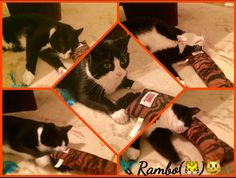 11/11/17 We've told you about the cat skin living in our house! Look at him today! Showing off playing with his Tiger! Puuuuh what a silly creature! We're glad he's not allowed playing with US!! D&D by Inger Johanne :)