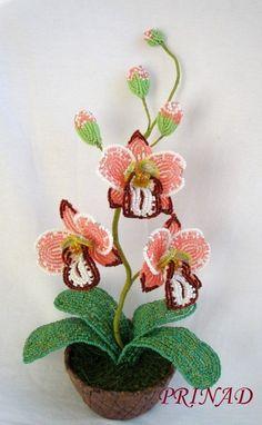 """Орхидея """"С 8 Марта"""""""