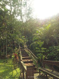 Bandar Seri Begawan, Railroad Tracks, Vineyard, Outdoor, Outdoors, Vine Yard, Vineyard Vines, Outdoor Games, The Great Outdoors