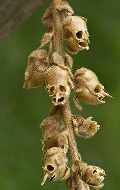 Weird Plants, Unusual Plants, Rare Plants, Exotic Plants, Strange Flowers, Unusual Flowers, Rare Flowers, Amazing Flowers, Flowers Nature