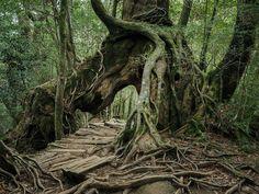 Yakushima - The Forest Spirit: Landscape Photography by Raphael Olivier #photography #Yakushima #forest #nature #Japan
