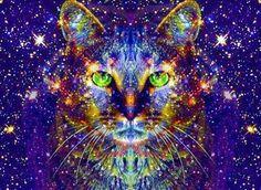 Gatto stellare