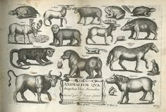 A Book of Four-Footed Beasts-1658-64 - John Overton and Peter Stent