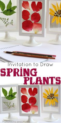 to Draw Spring Plants What a stunning preschool art and science investigation! Perfect for a Spring Flowers theme.What a stunning preschool art and science investigation! Perfect for a Spring Flowers theme. Preschool Learning Activities, Preschool Science, Spring Activities, Preschool Activities, Science Art, Science Table, Teaching Science, Teaching Art, Teaching Resources