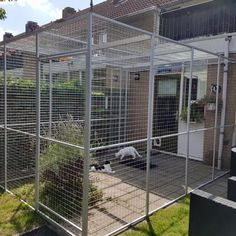 Animal House, Pets, Cage, Daisy, Decor, Cattery, Cat Playground, Balcony, Decoration