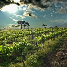 South Africa In the winelands. BelAfrique - your personal travel planner - www.BelAfrique.com