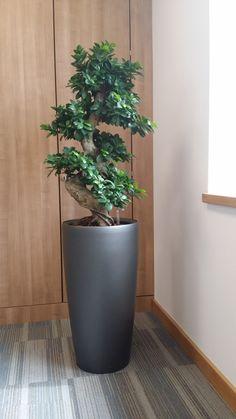 Office Plants Rented in Birmingham & Midlands