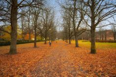 Höst i Linköping! Winter is coming! #naturephotography #ig_nature #ig_photooftheday #igersworldwide #photooftheday #igscandinavia #bestofscandinavia #nordic #sverige #sweden #photographer #meralink #linköping #linköpinglive #visitlinköping