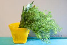 Green Inspiration #Cocos #Asparagus www.adomex.nl Green powers!