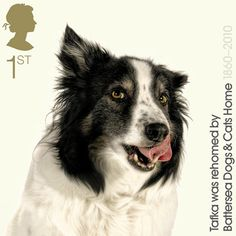 Abandoned pets become stamp stars