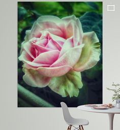 The Rose Poster - mimulux patricia no Illustration, Flowers, Plants, Photography, Photos, Digital Art, Photograph, Illustrations, Florals