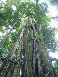 Ujung Kulon National Park, Indonesia #UNESCO