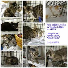 lizardmarsh: Lillington NC (Harnett Co.): DOGS AND CATS need re...