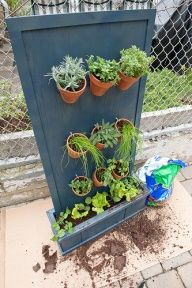 Building a vertical herb garden. This might be perfect for a small apartment balcony (if our next one gets better sunlight.)