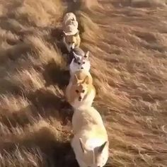 RT @Lmao: idk why i can't stop watching this https://t.co/BJXba71Pw3