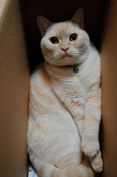 What's Up With That: Why Do Cats Love Boxes So Much? | Science takes on the important questions