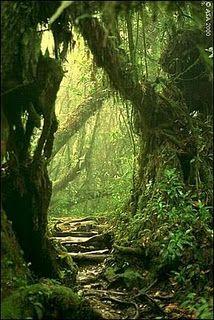 Montecristo cloud forest, El Salvador.