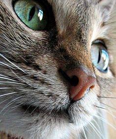 My other Cat by kova27.deviantart.com on @deviantART