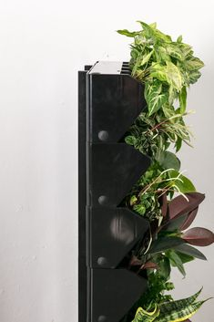 The perfect home garden! The self-watering planters let you know when to water your plants and look after them for you. Vertical Planter, Vertical Gardens, Garden Stand, Self Watering Planter, Plant Design, Balcony Garden, Soft Furnishings, All Design, The Locals