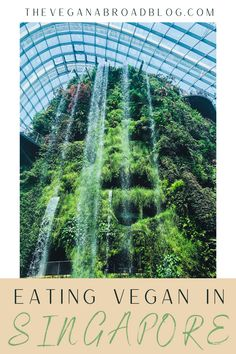 It is very easy to eat vegan in Singapore. Singapore also has a lot of westernized food options if Asian food isn't your thing. Click to read to see where to eat vegan in Singapore. #vegan #asia #singapore #veganinasia #veganinsingapore Singapore Travel Tips, Singapore Itinerary, Singapore Singapore, Amazing Destinations, Travel Destinations, Vegan Friendly Restaurants, Best Places To Vacation, Asia Travel, Travel Around