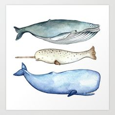 S'whale Art Print by Brooke Weeber - $16.00