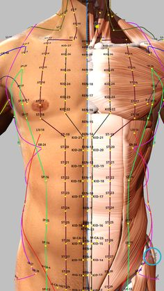 Acupuncture Points Chart, Meridian Acupuncture, Acupressure Points, Massage Tips, Massage Techniques, Massage Therapy, Acupressure Massage, Acupressure Treatment, Muscle Anatomy