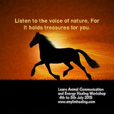 Animal Communication and Energy Healing Workshop.  www.amylimhealing.com.