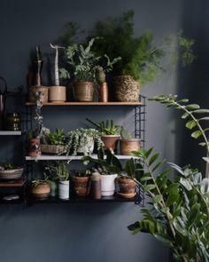 shelf unit + plants