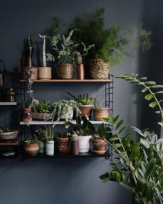 shelf unit + plants