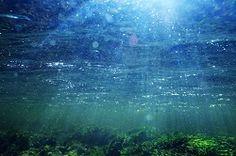 Las actividades humanas provocan el cambio de los ecosistemas marinos | NUESTROMAR