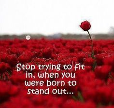 Stop trying to fit in, when you were born to stand out.