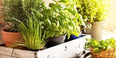 Learn how to plant an indoor herb garden with this easy step-by-step guide. Plus, get tips on what herbs to grow indoors and indoor herb garden ideas. Gardening For Beginners, Gardening Tips, Organic Gardening, Herb Garden, Vegetable Garden, Garden Bed, Culture D'herbes, Growing Herbs Indoors, Pot Jardin