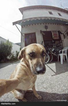 Animals Who Take 'Selfie' Photos
