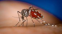 """""""Los buhoneros del acetaminofén y la epidemia de #Chikungunya"""" por @samirkabbabe http://shar.es/1aIFoh #Venezuela"""