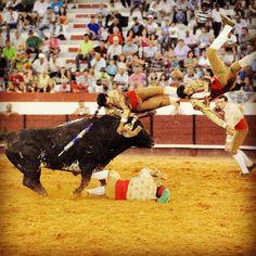 Bravos forcados Portugal, Cow, The Past, Revenge, Artist, Blood, Death, Animals, Places
