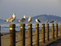 I can smell the ocean salt air and hear the sea gulls squawking. They are all lined up taking a sun bath. Pacific City Oregon, State Of Oregon, Oregon Usa, Oregon Coast, Pacific Northwest, Pacific Highway, Portland Oregon, Newport Oregon, Newport Beach