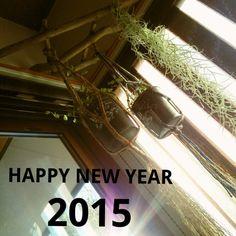 しゃれとんしゃあ会/流木/コーナーラック/DIY/プラントハンガー/部屋全体…などのインテリア実例 - 2015-01-01 15:40:59 | RoomClip(ルームクリップ)