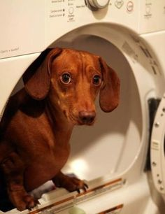 Yeah, I found that squeaky toy in here. Thought you could hide it from me, didn't you, DIDN'T YOU?