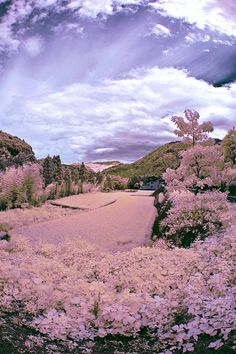 Toyama Farm And Rice Paddy In Infrared.