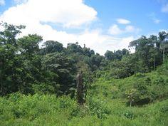 forest @ www.mytropicalhut.com