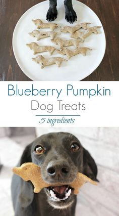 Healthy Dog Treats The best homemade dog treats. Your dog will thank you. - DIY blueberry pumpkin dog treats your pooch will drool over. This recipe has only 5 ingredients and is extremely easy to make. Puppy Treats, Diy Dog Treats, Healthy Dog Treats, Dog Biscuit Recipes, Dog Treat Recipes, Dog Food Recipes, Food Tips, Puppy Obedience Training, Training Your Dog