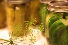 Curious about pickles and fermented foods? Get the lowdown on lactic acid fermentation in this podcast by the Nordic Food Lab in Copenhagen. Vinegar Cucumbers, Pickling Cucumbers, Pickling Vegetables, Pickling Spices, Preserving Cucumbers, Canning Dill Pickles, Vodka Potato, Vodka Mixes, Pickle Vodka