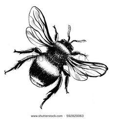 Afbeeldingsresultaat voor bee drawing