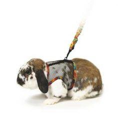 Superpet (Pets International) Comfort Harness/Leash - Lg