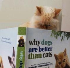 Catmando here hates reading Fiction!