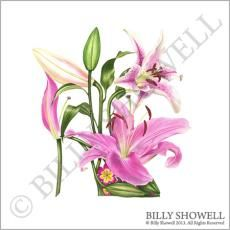 Pink Lilly Shoe